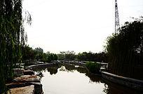 公园里的人工湖和湖畔的垂柳