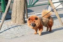 街头狗狗在找吃的