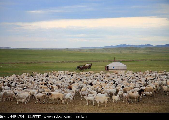 蒙古包和羊群图片, 高清 大图