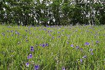 原野草甸野花