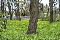 草坪和树木