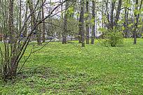 公园里的绿色草地