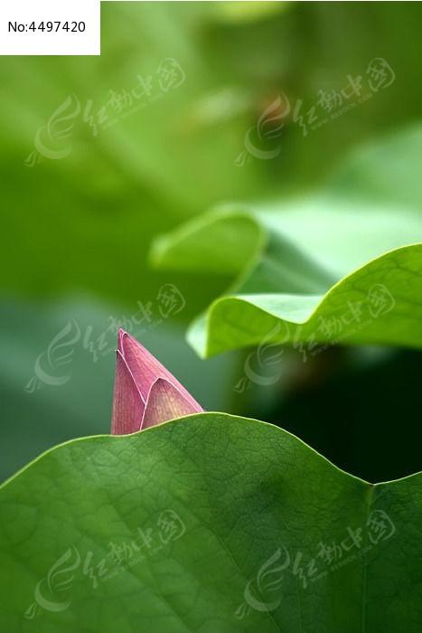 背景 壁纸 花 绿色 绿叶 树叶 植物 桌面 467_730 竖版 竖屏 手机
