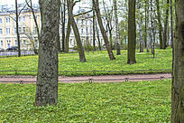 清新的绿色花园