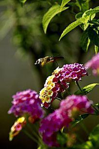 色彩斑斓的小碎花