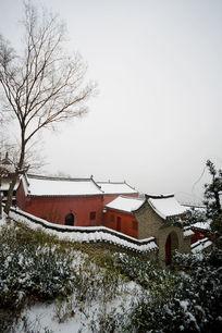 武当山八仙观的大树