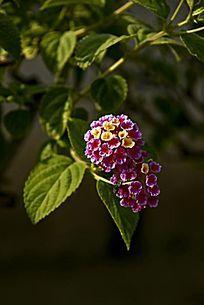 鲜艳的小碎花花卉
