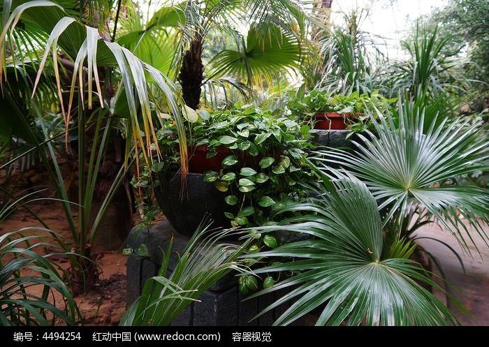 绿色的热带雨林图片,高清大图_树木枝叶素材