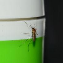 蚊子 蚊虫 蚊子特写 昆虫 吸血虫 夏天蚊子 害虫