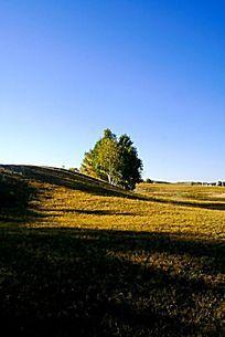 美丽的塞罕坝草原风光