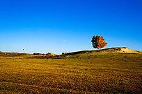 塞罕坝大草原上两棵树