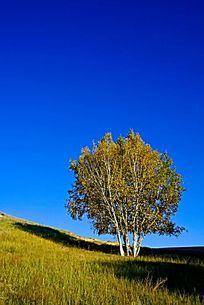 色彩艳丽的塞罕坝草原风光