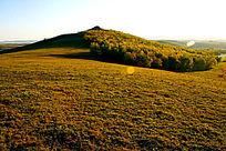 壮观的塞罕坝大草原风光