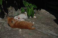 打哈欠的两只猫