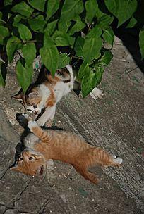 打架的两只猫