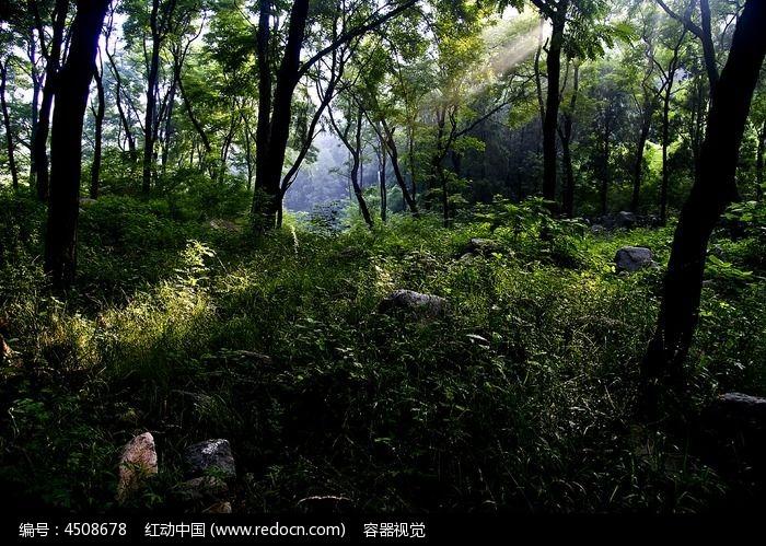 大山中的原始树林