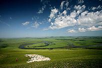 额尔古纳河牧场羊群
