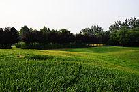 高尔夫球场里的绿草地