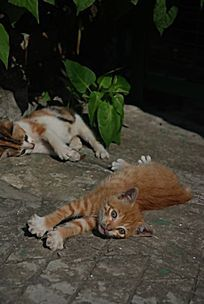 各自卖萌的两只猫