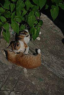 纠缠不清的两只猫