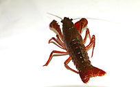 龙虾美食图片
