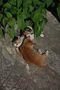 扭在一起的两只猫