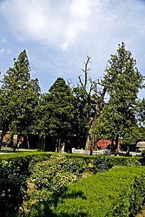 泰山岱庙内丰富的绿色植被