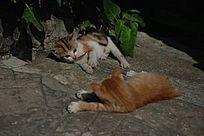 挑逗的两只猫