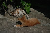 挑衅的两只猫