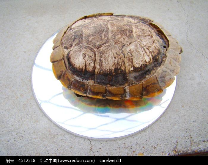原创摄影图 动物植物 水中动物 乌龟的正面  请您分享: 红动网提供