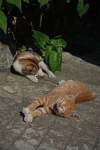 无所事事的两只猫