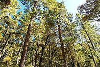 香格里拉森林景观