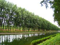 河边的一排树木