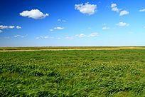 雁窝岛湿地草甸