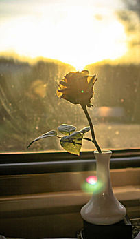 迷人的黄色玫瑰花