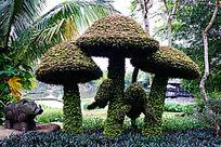 蘑菇造型灌木
