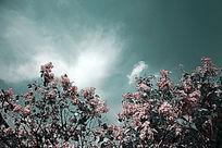 天空云朵下的小碎花