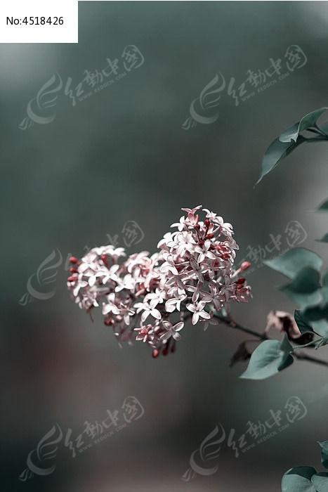 原创摄影图 动物植物 花卉花草 心形轮廓的小碎花