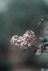心形轮廓的小碎花