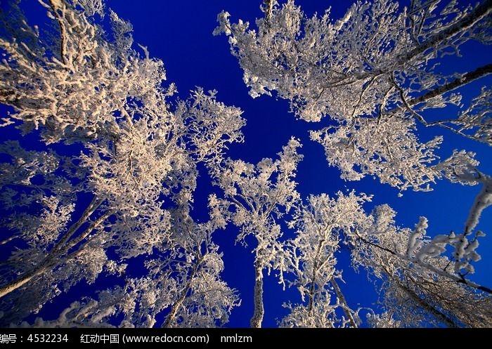 雪树梨花开图片,高清大图_森林树林素材