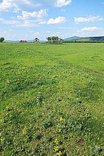 原野草甸风景