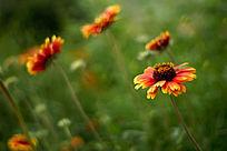 黄橙色的花丛
