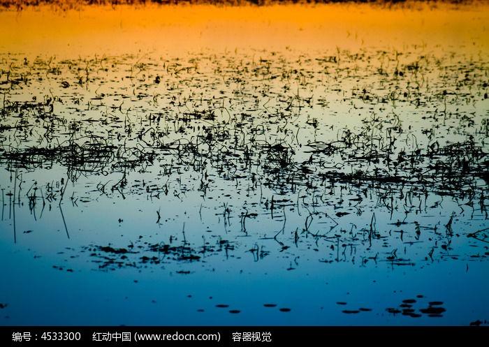 素材 湖泊/波光粼粼水域湖泊江河金色湖泊蓝色湖泊沼泽湿地湿地植物