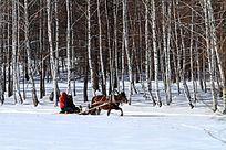 马拉爬犁行驶在林海雪原