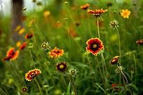 色彩斑斓的花丛