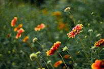 色彩亮丽的花丛
