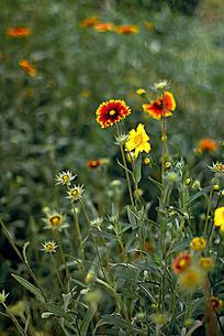 色彩鲜艳的花丛
