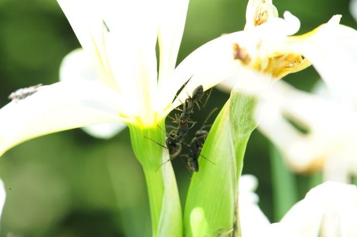 您当前访问图片主题是三只蚂蚁,编号是4551004, 文件格式是jpg,拍摄图片