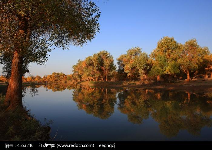 阿拉善湖畔胡杨林图片,高清大图_森林树林素材