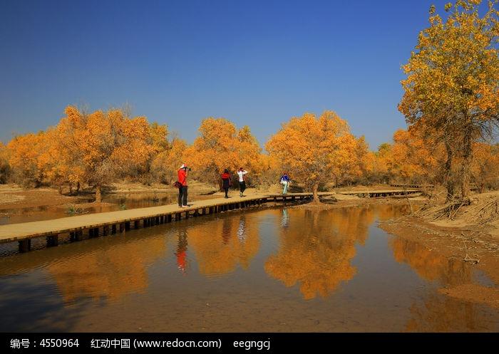 原创摄影图 自然风景 森林树林 阿拉善秋天的胡杨林  请您分享: 红动